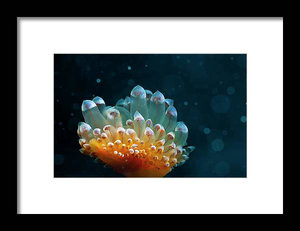 Underwater Framed Print featuring the photograph Sea Life by Ultramarinfoto