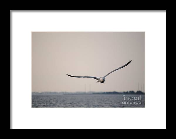Seagull Seaside Heights Beach Jersey Shore Framed Print featuring the photograph Seagull by Daniel Diaz