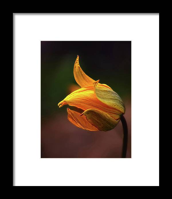 Macro Framed Print featuring the photograph Shine by Kent Mathiesen