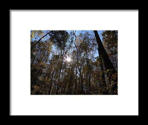 Sun Framed Print featuring the photograph Shining Through by Diannah Lynch