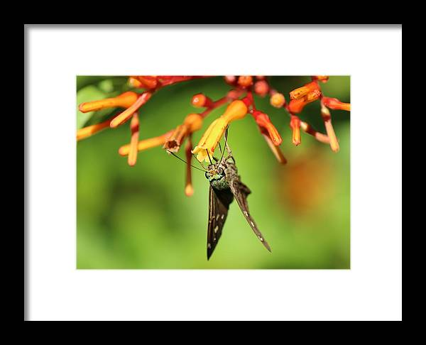 Skipper Framed Print featuring the photograph Skipper by Peggy Burley