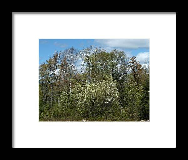 New England Framed Print featuring the photograph Spring Renewal by Gene Cyr
