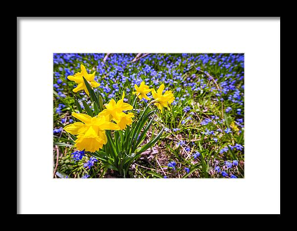 Wildflowers Framed Print featuring the photograph Spring Wildflowers by Elena Elisseeva