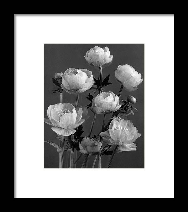 Flowers Framed Print featuring the photograph Still Life Of Flowers by J. Horace McFarland