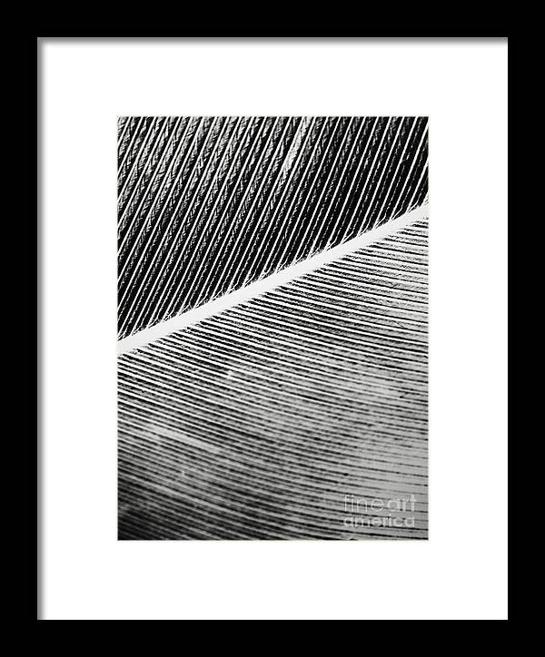 Microphotography Framed Print featuring the photograph Structure Of Quill by Sarka Olehlova