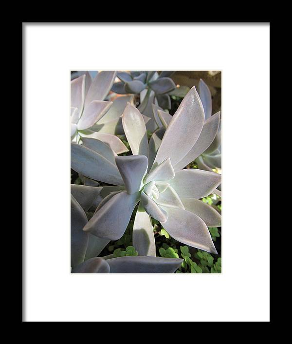 Florals Framed Print featuring the photograph Succulent by Michele Caporaso