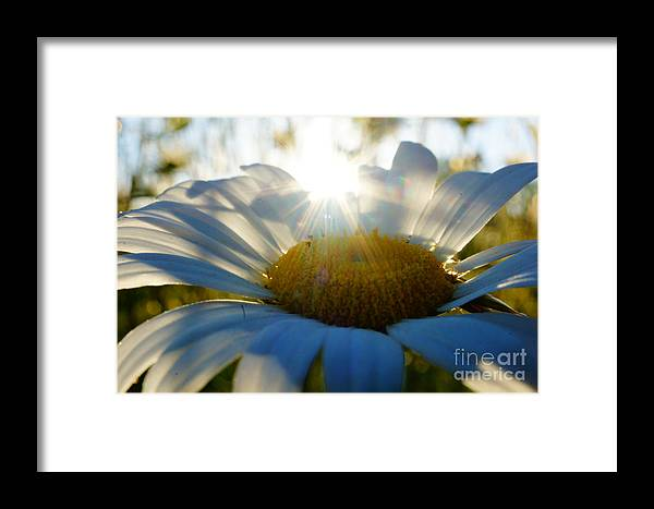 Daisy Framed Print featuring the photograph Sun Flower by Kandids By Katy