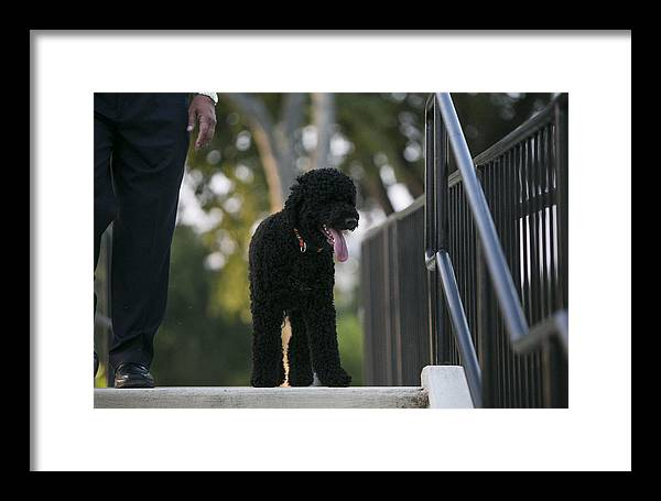 Obama Framed Print featuring the photograph Sunny Obama by JP Tripp
