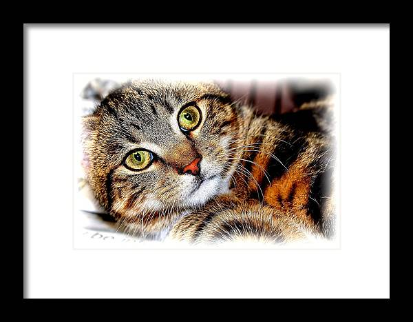 Brown Tabby Framed Print featuring the photograph Sweetie by Joyce Baldassarre