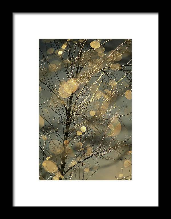 Color Image Framed Print featuring the photograph The Frozen Branches Of A Small Birch by Raymond Gehman