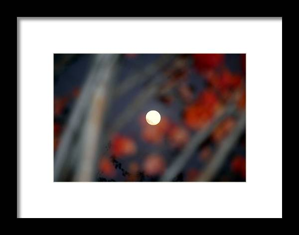 Moon Framed Print featuring the photograph The Moon by William Copeland