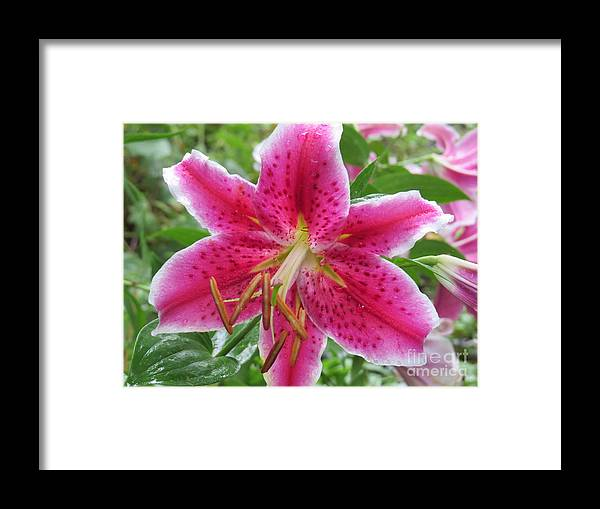 Flowers Framed Print featuring the photograph The Stargazer by Brenda Ketch