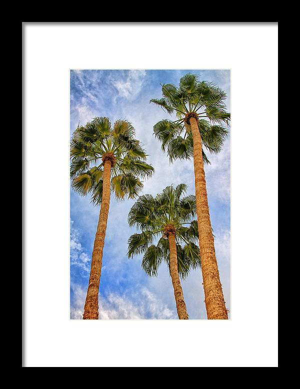 Palm Springs Framed Print featuring the photograph THREE PALMS Palm Springs by William Dey