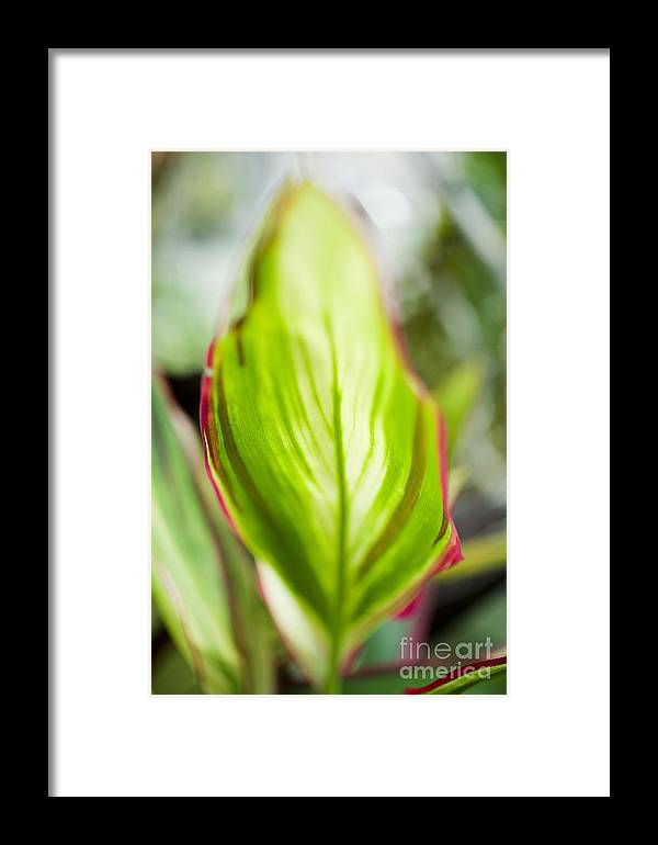 Hawaii Framed Print featuring the photograph Ti-leaf Macro by Charmian Vistaunet