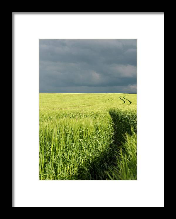 Tranquility Framed Print featuring the photograph Tire Tracks In Grain Field by Thomas Winz