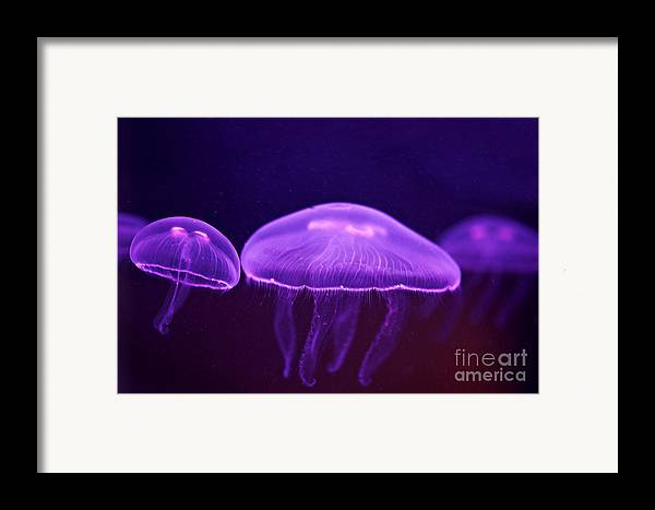 Jelly Fish Art Photographs Framed Print featuring the photograph Towards The Light by Artist and Photographer Laura Wrede