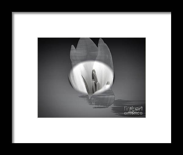 Flower Framed Print featuring the photograph Translucent Flower by Keith Lyman