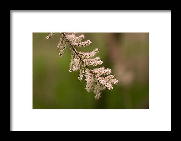 Flower Framed Print featuring the photograph Tree Flower by Stupinean Dan Adrian