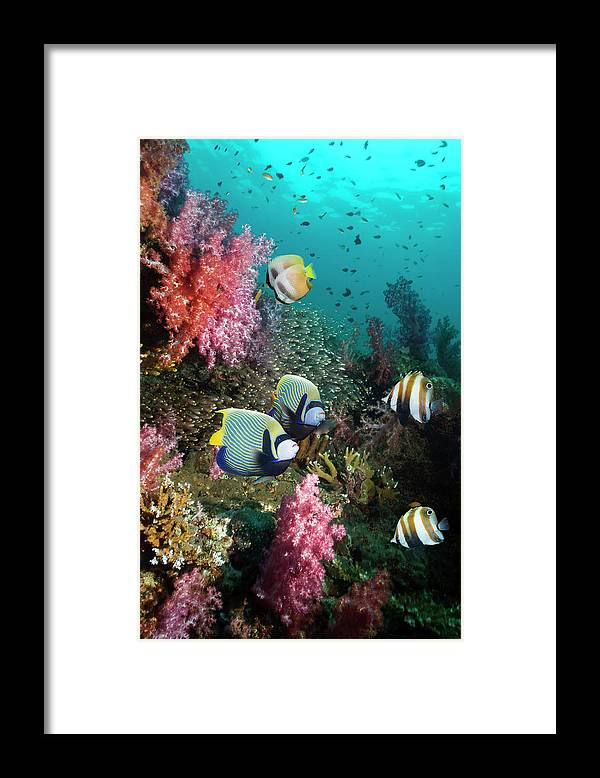 Tranquility Framed Print featuring the photograph Tropical Coral Reef Scenery by Georgette Douwma