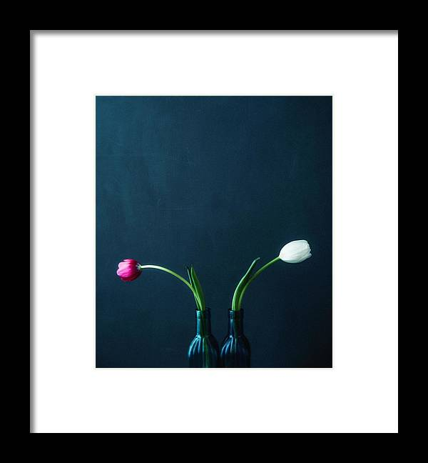 Mother's Day Framed Print featuring the photograph Tulip Still Life For Mothers Day by Catlane