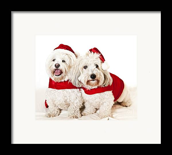 Dogs Framed Print featuring the photograph Two Cute Dogs In Santa Outfits by Elena Elisseeva