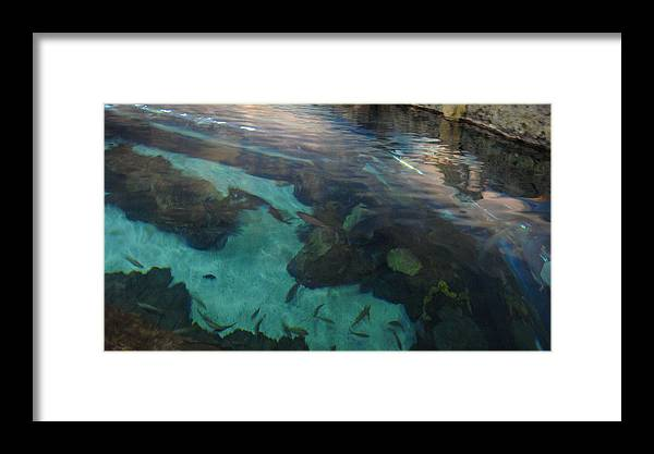 Underwater Framed Print featuring the photograph Underwater by Tinjoe Mbugus