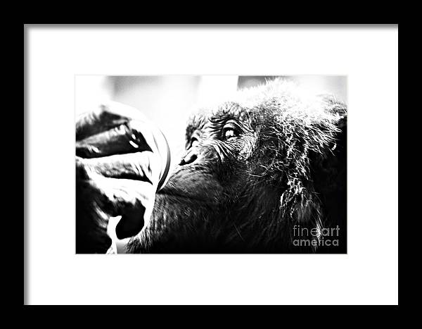 Animal Framed Print featuring the photograph Untitled by Jaclyn Burns