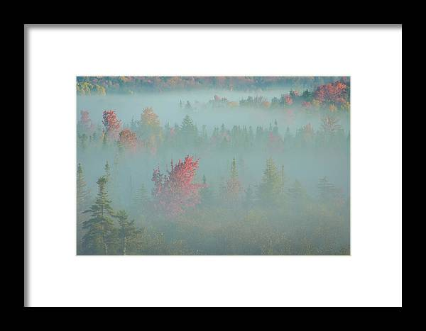 Autumn Framed Print featuring the photograph Usa, West Virginia, Canaan Valley State by Jaynes Gallery