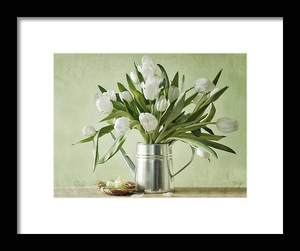 Tulpen Framed Print featuring the pyrography Waiting For Spring by Steffen Gierok
