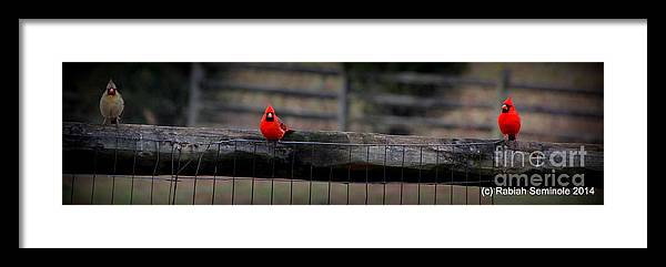 Cardinals Framed Print featuring the photograph Waiting by Rabiah Seminole