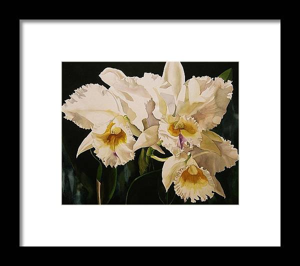 Orchid Framed Print featuring the painting White Cattleya Orchids by Alfred Ng