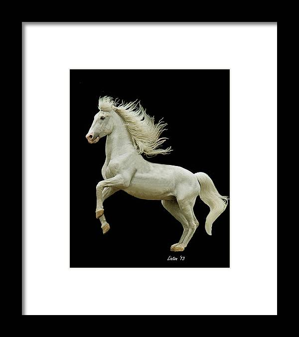 Stallion Framed Print featuring the photograph White Stallion by Larry Linton