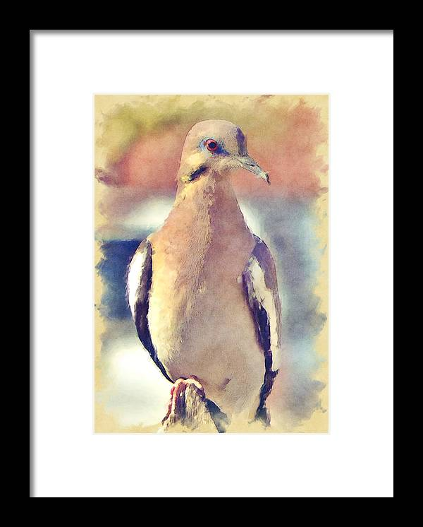Dove Framed Print featuring the photograph White-Winged Dove by David G Paul