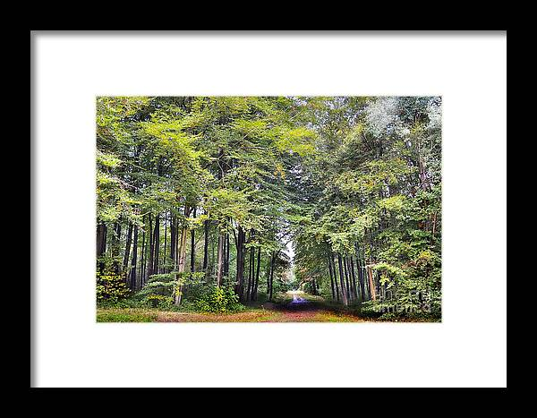 Woods Framed Print featuring the photograph Whitwell Wood by Andrew Barke