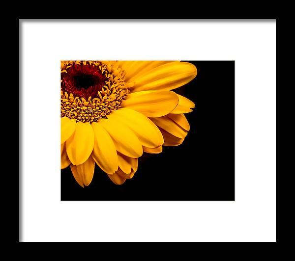 Flower Framed Print featuring the photograph Yellow Gerbera Daisy by Xenia Headley