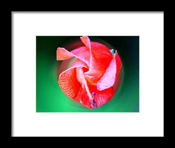 Framed Print featuring the photograph 10212d by Scotty P Tography