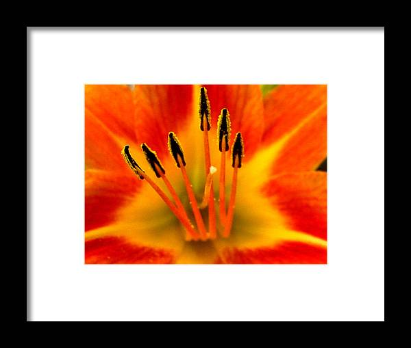 Framed Print featuring the photograph 10512no by Scotty P Tography