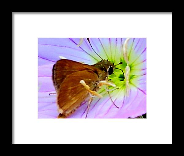 Framed Print featuring the photograph 10512nq by Scotty P Tography