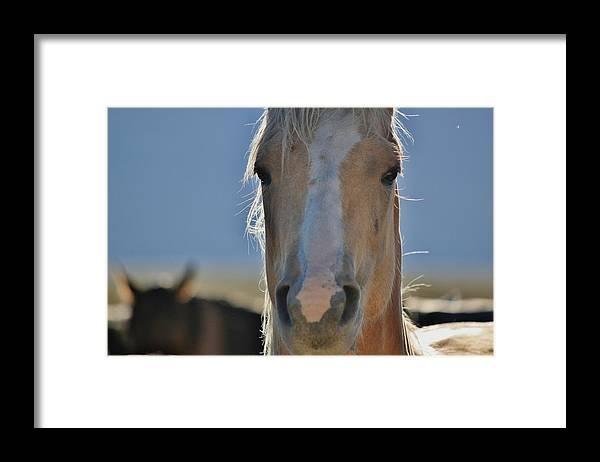 Framed Print featuring the digital art 108 by Wynema Ranch