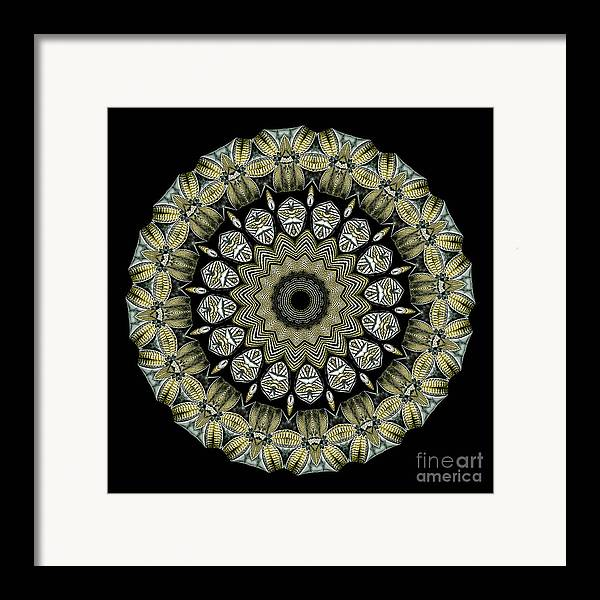 Ernst Haeckel Framed Print featuring the photograph Kaleidoscope Ernst Haeckl Sea Life Series by Amy Cicconi