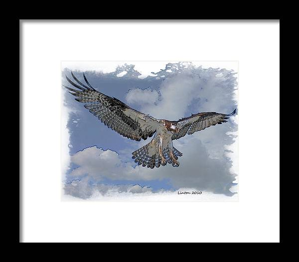Osprey Framed Print featuring the digital art Osprey Flight by Larry Linton