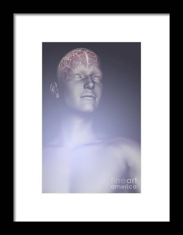 Biomedical Illustration Framed Print featuring the photograph The Human Brain by Science Picture Co