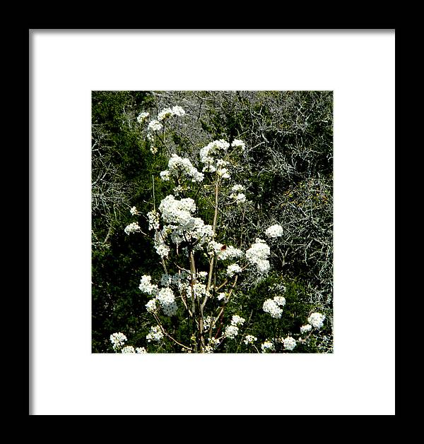 Framed Print featuring the photograph 11212b by Scotty P Tography