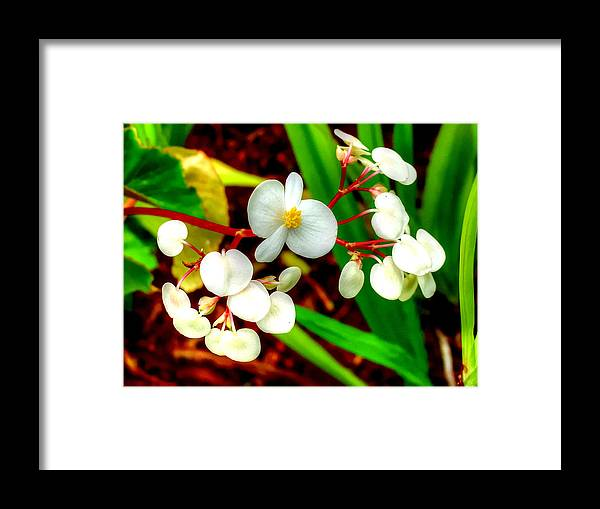 Framed Print featuring the photograph 11812bb by Scotty P Tography
