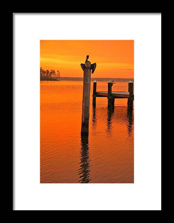 Birds Framed Print featuring the photograph 12001 Weeks Bay Pelicans by Joe Boyington