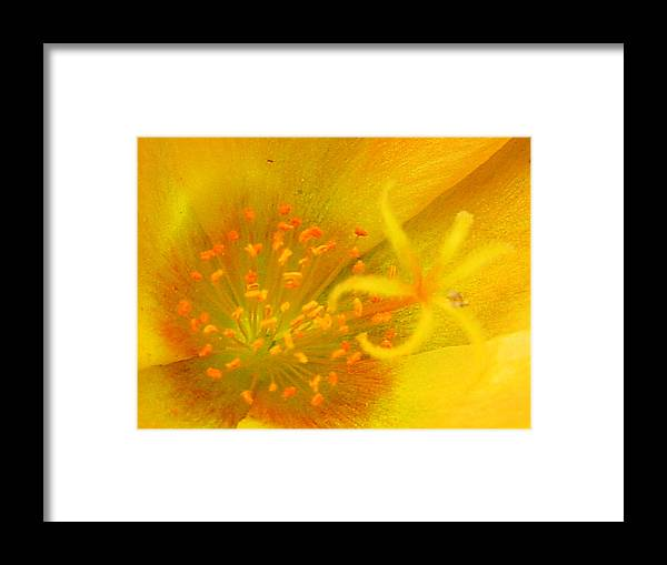 Framed Print featuring the photograph 12181 by Scotty P Tography