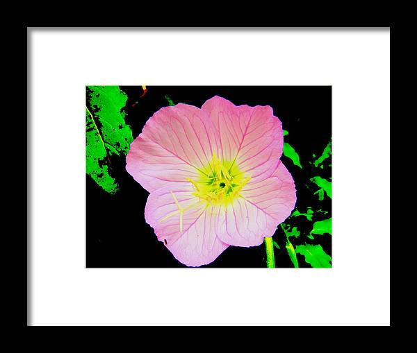 Framed Print featuring the photograph 1228bbb by Scotty P Tography