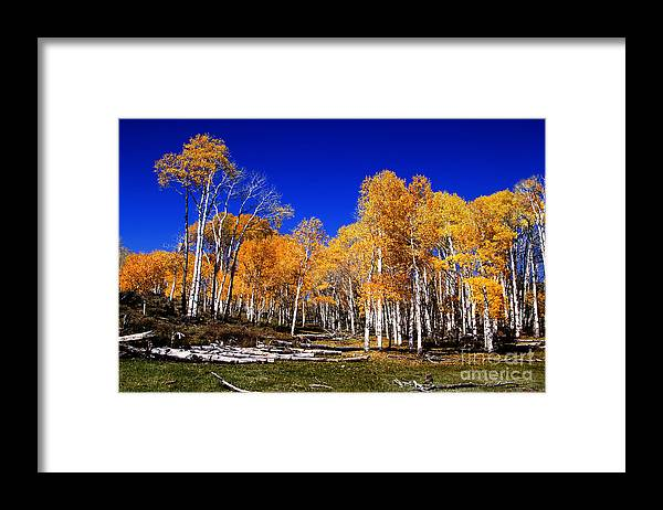 Autumn Framed Print featuring the photograph Rocky Mountain Fall by Southern Utah Photography