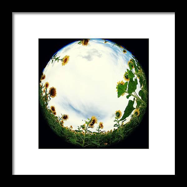 Sonnenblumen Framed Print featuring the photograph Sunflowers by Falko Follert