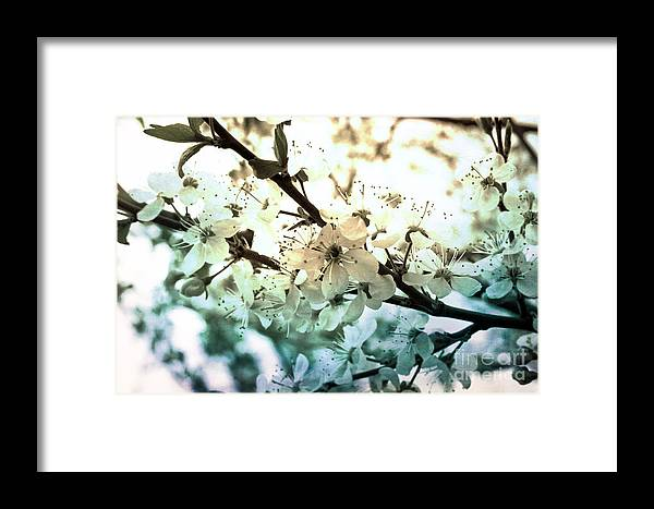 Spring Framed Print featuring the photograph Spring by Lali Kacharava